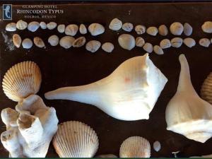 Rhincodon Typus, Hotels  Holbox Island - big - 47