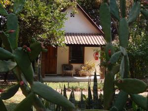 Green Tree Lodge, Chaty v prírode  Livingstone - big - 12