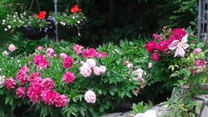 A Wildwood Rose Vacation Rental, Villas  Kelowna - big - 13