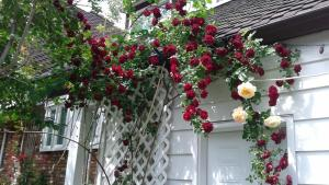 A Wildwood Rose Vacation Rental, Villas  Kelowna - big - 14