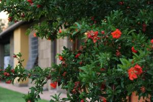 Al Vecchio Fontanile B&B, Bed & Breakfast  Ladispoli - big - 61
