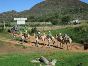 Wilgewandel Holiday Farm & Day Restaurant, Bed & Breakfasts  Oudtshoorn - big - 48