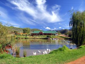 Wilgewandel Holiday Farm & Day Restaurant, Bed & Breakfasts  Oudtshoorn - big - 1