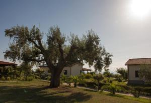 Agriturismo Ninea, Country houses  Ricadi - big - 10
