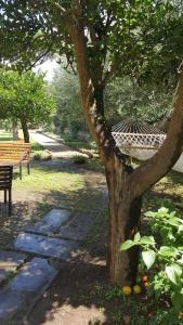 B&B Massico Apartments, Bed and breakfasts  Sant'Agnello - big - 44
