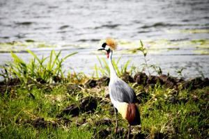 Lake Chahafi Resort, Luxusní stany  Kisoro - big - 59