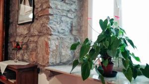 Casa Rescida, Apartmanok  Trieszt - big - 14