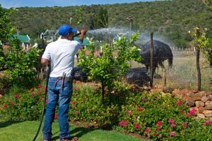 Berluda Farmhouse and Cottages, Ferienwohnungen  Oudtshoorn - big - 79