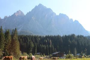 Alpin Park, Bed and Breakfasts  Sappada - big - 41