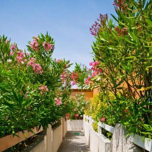 Holidayland, Villaggi turistici  Narbonne-Plage - big - 2