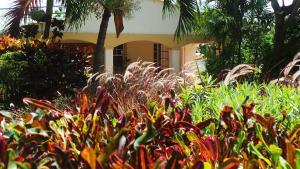 Blue Horizons Garden Resort (32 of 35)