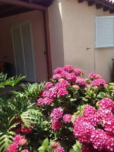 Pili Evia's Accommodation