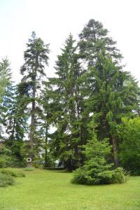 Villa Elena, Holiday homes  Borovets - big - 31