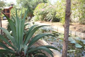 Guruge Villa Habarana, Penziony – hostince  Sigiriya - big - 20