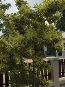 Baan Dusit 3BR Pool Villa, Ville  Na Jomtien - big - 34
