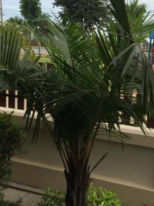 Baan Dusit 3BR Pool Villa, Ville  Na Jomtien - big - 35