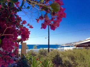 Manos Studios, Apartments  Platis Yialos Mykonos - big - 4