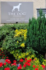 The Dog at Wingham (9 of 183)
