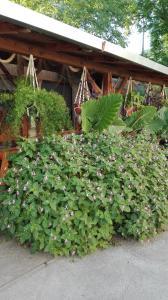 Farm stay Lackovic, Farmy  Bilje - big - 26