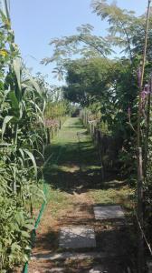 Farm stay Lackovic, Farmy  Bilje - big - 28