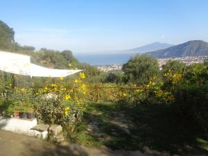 Gli Ulivi Agriturismo, Farm stays  Sant'Agnello - big - 89