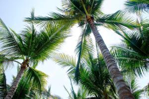 Punta arena Surf, Ferienwohnungen  Puerto Escondido - big - 86