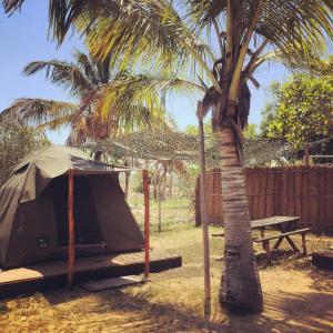 Mozambeat Motel, Hostels  Praia do Tofo - big - 12