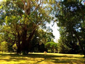 Cedarwood Holiday Park, Виллы  Deans Marsh - big - 10