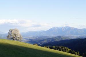 Pension zum Hauser, Affittacamere  Untergreutschach - big - 51