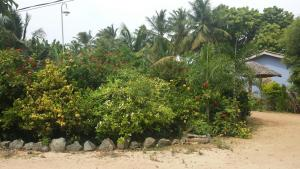 Island Breeze Inn, Hotels  Nilaveli - big - 20