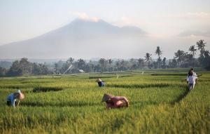 Soori Bali (13 of 60)