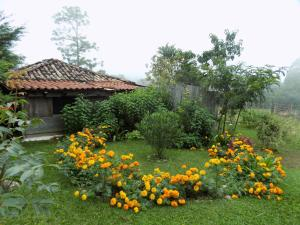 Rancho Hostal La Escondida Eco Park, Bed and breakfasts  Teopisca - big - 2