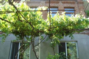 Guesthouse Valeria, Ostelli  Borjomi - big - 13
