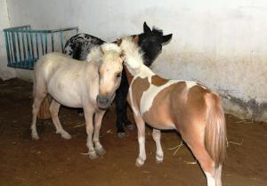Creo Equestrian and Country Club, Penzióny  Barka - big - 15
