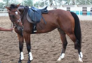 Creo Equestrian and Country Club, Гостевые дома  Барка - big - 16