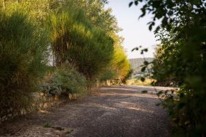 Borgo Il Poggiaccio Residence, Country houses  Sovicille - big - 102