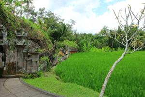 Wira Guest House Ubud, Pensionen  Ubud - big - 25