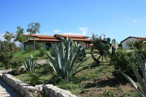Agriturismo Ninea, Country houses  Ricadi - big - 13