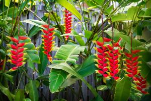 Heliconia on Kara, Holiday homes  Airlie Beach - big - 12