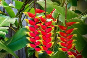Heliconia on Kara, Holiday homes  Airlie Beach - big - 19