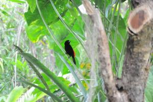 Talamanca Reserve, Hotely  Rivas - big - 25