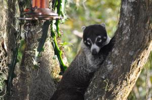Talamanca Reserve, Hotely  Rivas - big - 24