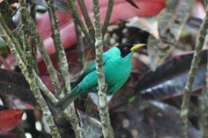 Talamanca Reserve, Hotely  Rivas - big - 35
