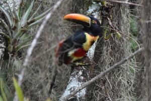 Talamanca Reserve, Hotely  Rivas - big - 34