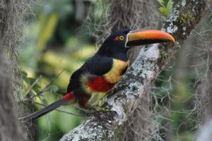 Talamanca Reserve, Hotely  Rivas - big - 33