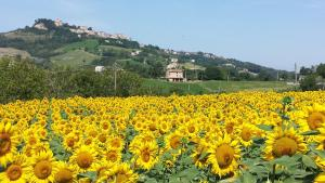 B&B Antica Fonte del Latte, Bed and breakfasts  Santa Vittoria in Matenano - big - 18