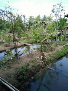 At Baan Suan, Homestays  Phra Pradaeng - big - 9
