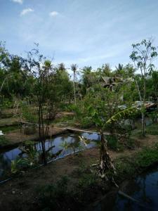 At Baan Suan, Homestays  Phra Pradaeng - big - 11