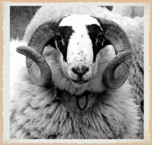 L'Hôtel du Mouton blanc