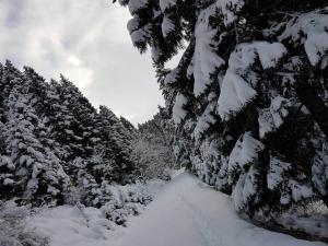 Azra Dağ Evi̇, Alpesi faházak  Güzelce - big - 25